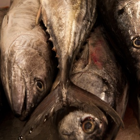 our first event with kinfolk magazine : fish buying, preparing, and makingsushi